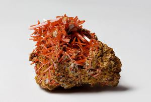 A specimen of crocoite from the Willems Miner Collection, picture by JJ Harrison