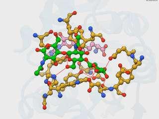 [NodS N-methyltransferase]