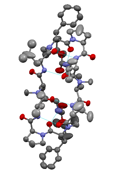 Crystal structure of modified Gramicidin S.png