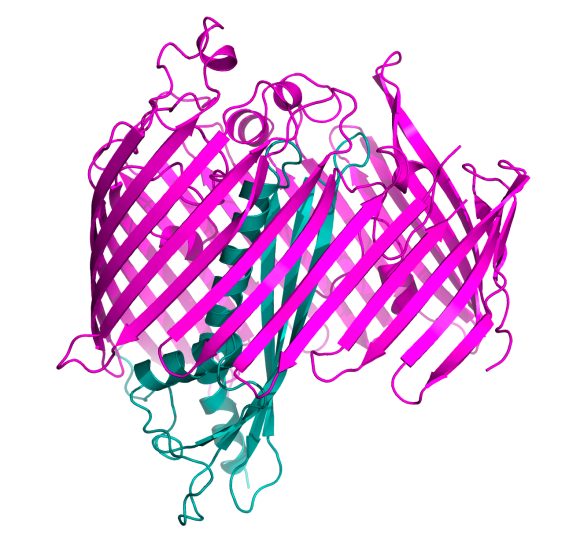 Image generated by Pymol (http://www.pymol.org/) using the coordinates from the protein data bank (accession code: 4N4R)
