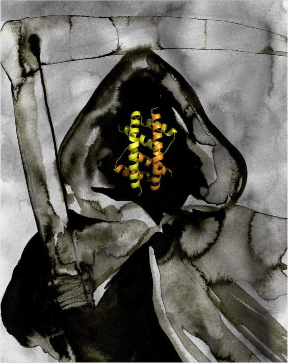Water-colour painting of the Grim Reaper by Rachel Bucknall, with the BH3:groove dimer structure of Bak as the face. The structure was generated using pymol.