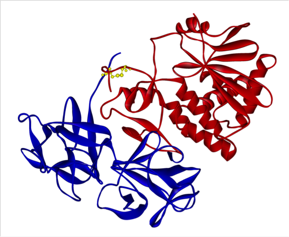 Ricin from Ricinus communis with A chain in red and B chain in blue and linking disulphide bond in yellow.
