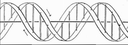 DNA, as drawn in the 1953 paper by Watson and Crick.