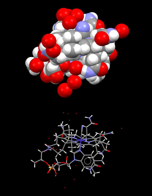 "A space filling model of Vitamin B12 (cyano-cobalamin) (top) - and a ""capped stick representation of the same molecular structure (red= oxygen, grey= carbon, white = hydrogen, blue = cobalt, mauve = nitrogen, orange = phosphorus) both structures depict the molecule in the same orientation – note the ease of access to the CN group bound at the top of the corrin ring – the reactive position of the molecule. Isolated red crosses or spheres are water of crystallization. (coordinates used from DOI: 10.1039/c003378b)"